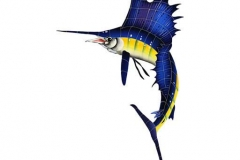 Sailfish-left-small