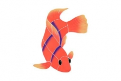 Flame-Angel-Fish-small-righ