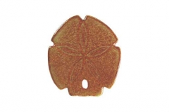 Sand-Dollar-5in-brown