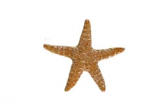 Starfish-5in-brown