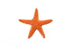 Starfish-5in-orange
