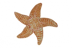 Starfish-9in-brown
